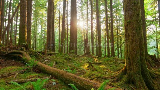 Med Skovrejsning kan du plante en skov